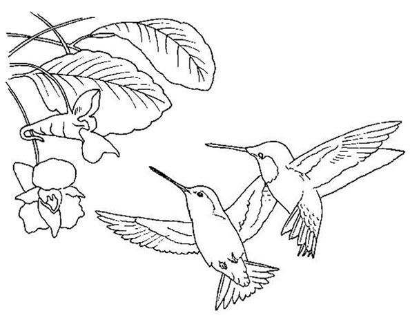 kolibri zum malen
