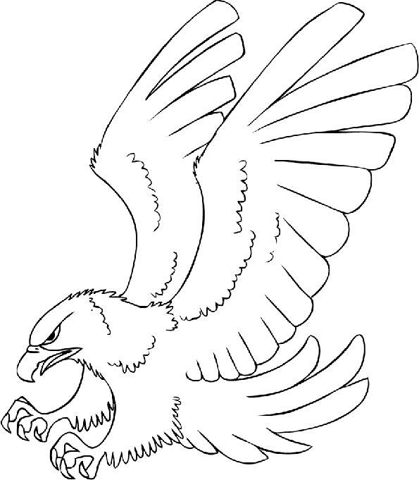 Adler im Flug