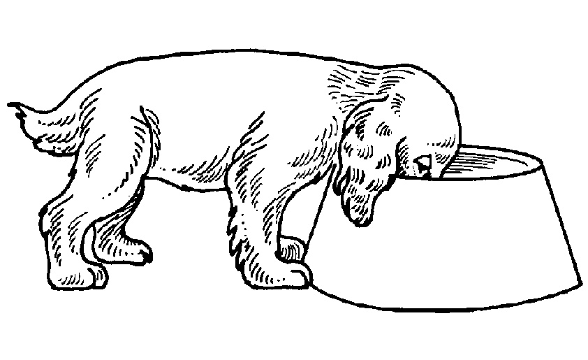 Hund  seinem Futternapf