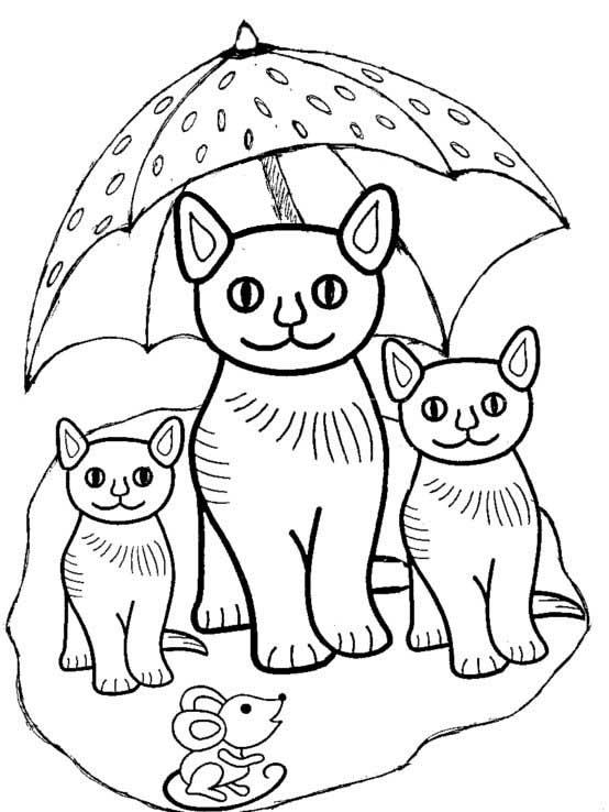 Drei niedliche Kätzchen