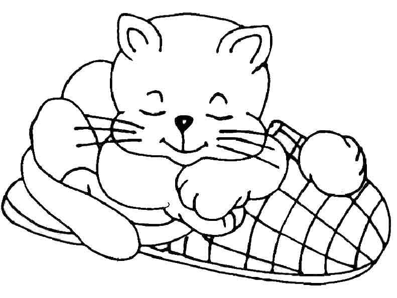 Die Katze auf dem Schuh