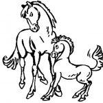 Pferde 03