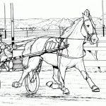 Pferde 05