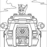 Paw Patrol (6)